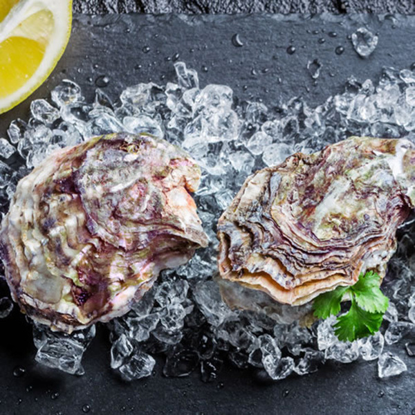 Fresh Unshucked Oysters
