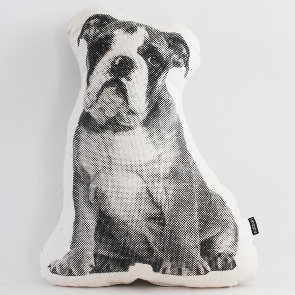 Mr. T the English Bulldog